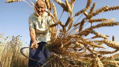 Photo of Надбавка к пенсии за стаж в сельском хозяйстве 30 лет: размер, условия предоставления