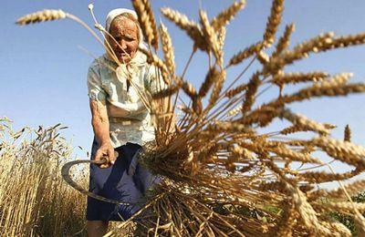 30 лет стажа в сельском хозяйстве